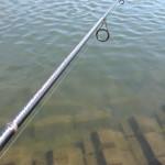 茨城川釣行