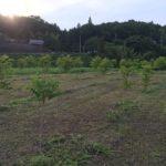 6月の漆畑